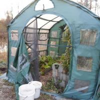 November crops in hoop house