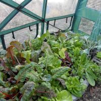Crops still happy in hoop house after heavy frost.