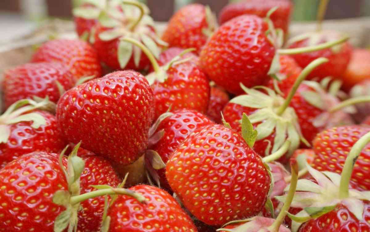 Fresh picked strawberries, sitting in pile ready to use in salad or eat!