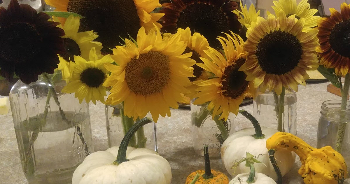 Inside sunflower and pumpkin display, showing large and small sun flowers and unusual colored gourds.
