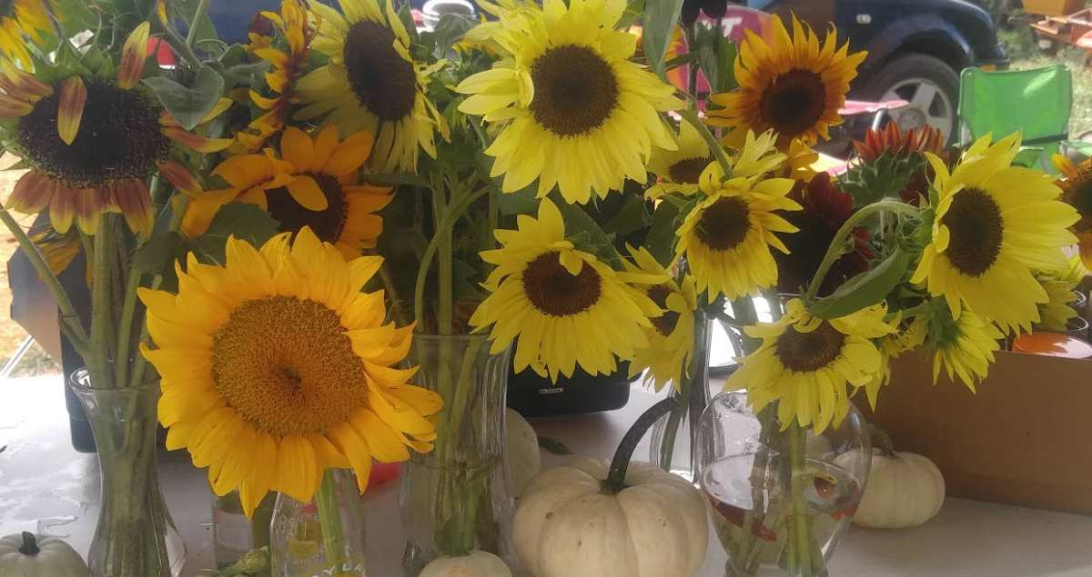 Large Outside Sunflower and Pumpkin Display at recent farmers market