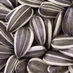 Sunflower seeds are a healthy and tasty treat you can grow yourself.