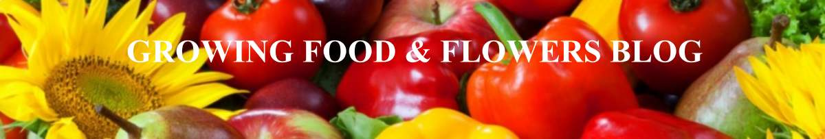Growing Food and Flowers Blog header picture