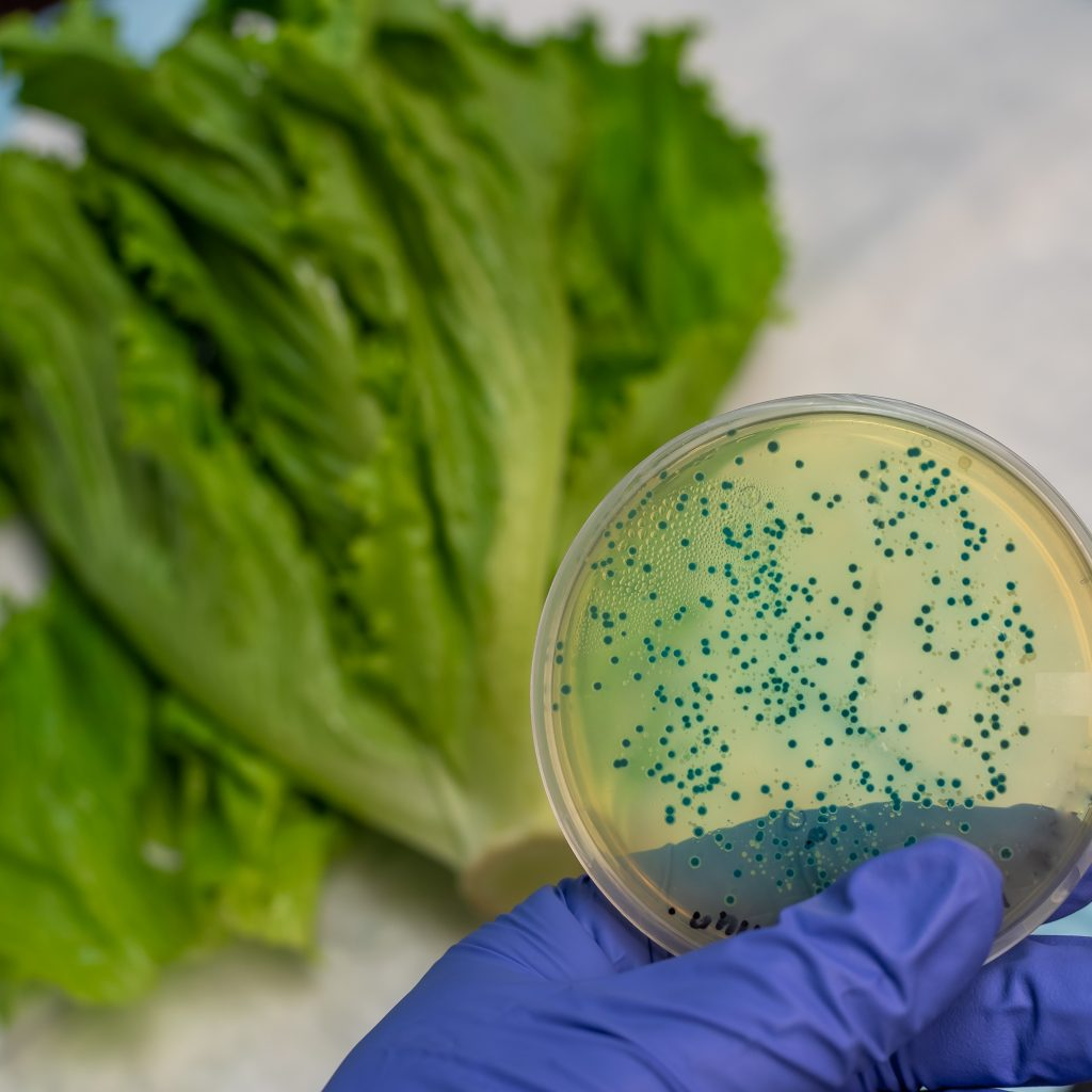 E coli sample in romaine lettuce