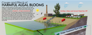 Runoff from harmful algal blooms
