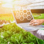 vegetable farms with laptops